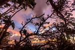Dawn sunlight colors the sky in front of mangrove trees along the shoreline of Kosrae, Micronesia.