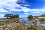 Local woman walks across coral bed at low tide, heading for the edge of the ocean to collect sea slugs for dinner. Kosrae, Micronesia.