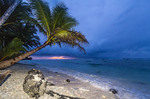 Coconut palm on the edge of a beach during a stormy dawn, Kosrae, Micronesia.