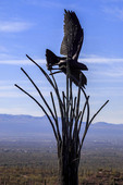 Metal sculpture of eagle flying over the skeletal remains of a saguaro cactus, artwork on display at the Arizona Sonora Desert Museum.