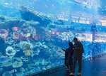 Viewing glass of the Dubai Aquarium, located in the Dubai Mall