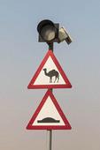 Camel crossing traffic sign outside Dubai, UAE