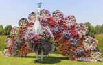 Peacock topiary covered in flowers at Dubai's Miracle Garden