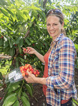 Visiting woman picks cherries at G&C Farms outside Wenatchee, WA, USA.