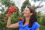 Cory Wray, daughter of G&C Farms owners with Orondo Ruby cherries growing on trees at the orchard outside Wenatchee, WA, USA.