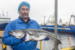 Icelandic fisherman holds fresh caught red fish, a type of cod.