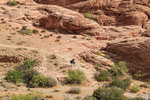 Hikers among in the Calico Hills of Red Rock Canyon National Conservation Area