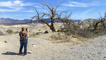 Woman photographs picturesque dead trees in Death Valley National Park.