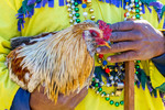 Rodney Victorian, chicken caption, holds one of his prize roosters for  Mardi Gras Chicken Run