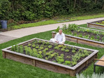 Culinary Director Roy Breiman shows off the herb and vegetable garden which supplies Cedarbrook Lodge's upscale gourmet Copperleaf Restaurant near Seattle.