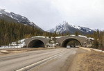 One of many animal overpasses on the Trans Canada Hwy.