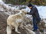 Guide and center owner Shelley Black bonds with one of her wolves in the forest near Golden BC.