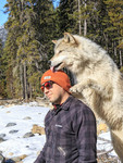Man meets Scrappy Dave, one of the wolves on a guided wolf walk through the forest