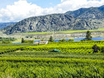 Rolling hills and farmland with planted crops in the southern Okanagan Valley, BC, Canada.