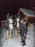 Checking out the Clydesdale horses that pull the sleigh to a yummy rustic/gourmet dinner at Big White Ski Resort in southern British Columbia, Canada