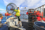 Stacking traps while prawn fishing on commercial fishing boat Nordic Rand off Vancouver Island, BC, Canada