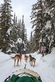Dog sled tour with Mountain Man Dog Sled Adventures at Sun Peaks Resort in British Columbia, Canada.