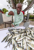 Elderly man sells jack fish by the side of the road in Holetown, Barbados in the Caribbean.
