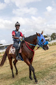 Exercising a race horse at Garrison Savannah, Historic horse race track in Bridgetown, Barbados.