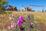 Guests leave the breakfast corral on horseback during a breakfast ride at White Stallion Ranch, a dude ranch.