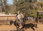Weekly rodeo at White Stallion Ranch. Riders take part in team penning, a sometimes timed event where a team of riders drives a steer into a pen.