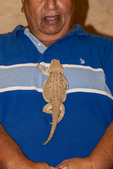 """Stumpy the bearded dragon with Phil Garcia during the evening """"Critter Show"""" at White Stallion Ranch"""