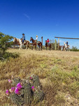 Guests leave the breakfast corral on horseback during a breakfast ride at White Stallion Ranch outside Tucson, AZ. Blooming hedgehog cactus in foreground.