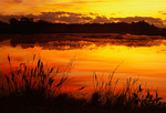 freshwater marsh at sunrise