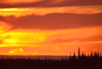 Boreal forest/Taiga (subarctic spruce forest), stormy sunset