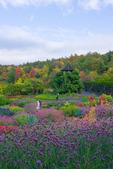 Wedding photography in the flower garden