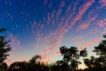 sky and subtropical trees at twilight