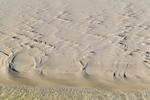Rippled sandbar at  low tide, Gulf Beach
