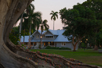 """Henry Ford's winter home, """"The Mangoes,"""" beyond Mysore Fig"""