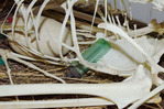 Museum exhibit depicting plastic trash accisentally eaten by albatross, remaining inside body cavity