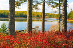 Aunt Betty Pond in Autumn, Acadia National Park, Mount Desert Island, Maine