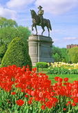 George Washington Statue and Red Tulips, Boston Public Garden, Boston, Massachusetts