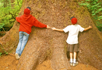 Kids Hugging a Giant Tree, Hoh Rainforest, Olympic National Park, Washington