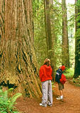 Kids Looking up at Redwood Trees, Simpson-Reed Grove, Jedediah Smith State Park, Redwood National Park, California