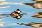 Hiking on the Sliding Sands Trail, Haleakala National Park, Maui, Hawaiian Islands, Hawaii,