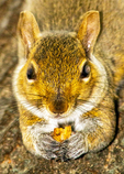 Girl with Nuthatch in Hand