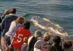 People Whalewatching