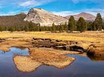 Pu'u Loa Petroglyphs, Hawaii Volcanoes National Park, Kilauea Volcano, Hawaiian Islands, Big Island, Hawaii