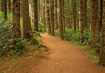 Trail in Old Growth Forest, Cape Meares State Park, Oregon