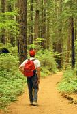 Hiker on Silver Falls Trail, Ohanepecosh, Mount Rainier National Park, Washington