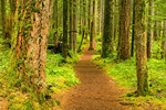 Silver Falls Trail, Ohanepecosh, Mount Rainier National Park, Washington