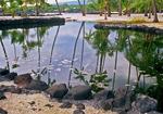 Royal Fish Pond, Puuhonua o Honaunau National Historic Park, City of Refuge, Hawaiian Islands, Big Island, Hawaii