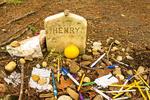 Henry David Thoreau Grave, Sleepy Hollow Cemetery, Concord, MA