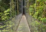 Birds at Sunset on Bowman's Beach, Sanibel Island, Florida