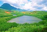 Menehune Fish Pond, Alekoko Fishpond, Hawaiian Islands, Lihue, Kauai, Hawaii