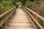 Wooden Boardwalk, Corkscrew Swamp Audubon Sanctuary, Naples, Florida